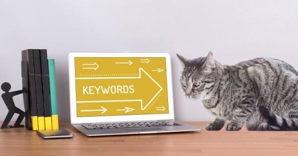 מחקר מילות מפתח לקידום אתרי חנות חיות