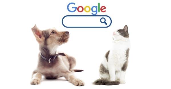 קידום אתרים לחנות חיות